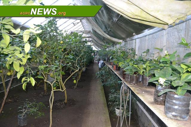 Банановая ферма: тропики посреди снегов