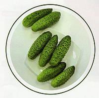 Огурец Надежда F1 1000 семян, фото 1