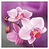 """Картина для рисования камнями Diamond painting Алмазная вышивка """"Розовые орхидеи"""" полная выкладка"""