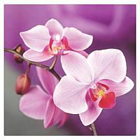 """Картина для рисования камнями Diamond painting Алмазная вышивка """"Розовые орхидеи"""" полная выкладка , фото 1"""