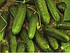 Огурец Меренга F1 10 семян