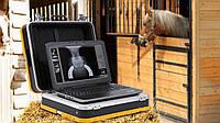 Диагностика и лечение лошади в Европе