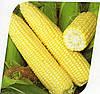 Кукурудза цукрова Сігнет F1 5000 насіння
