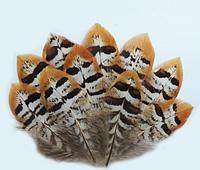 Натуральное перо фазана Длинна 55-60см*1шт