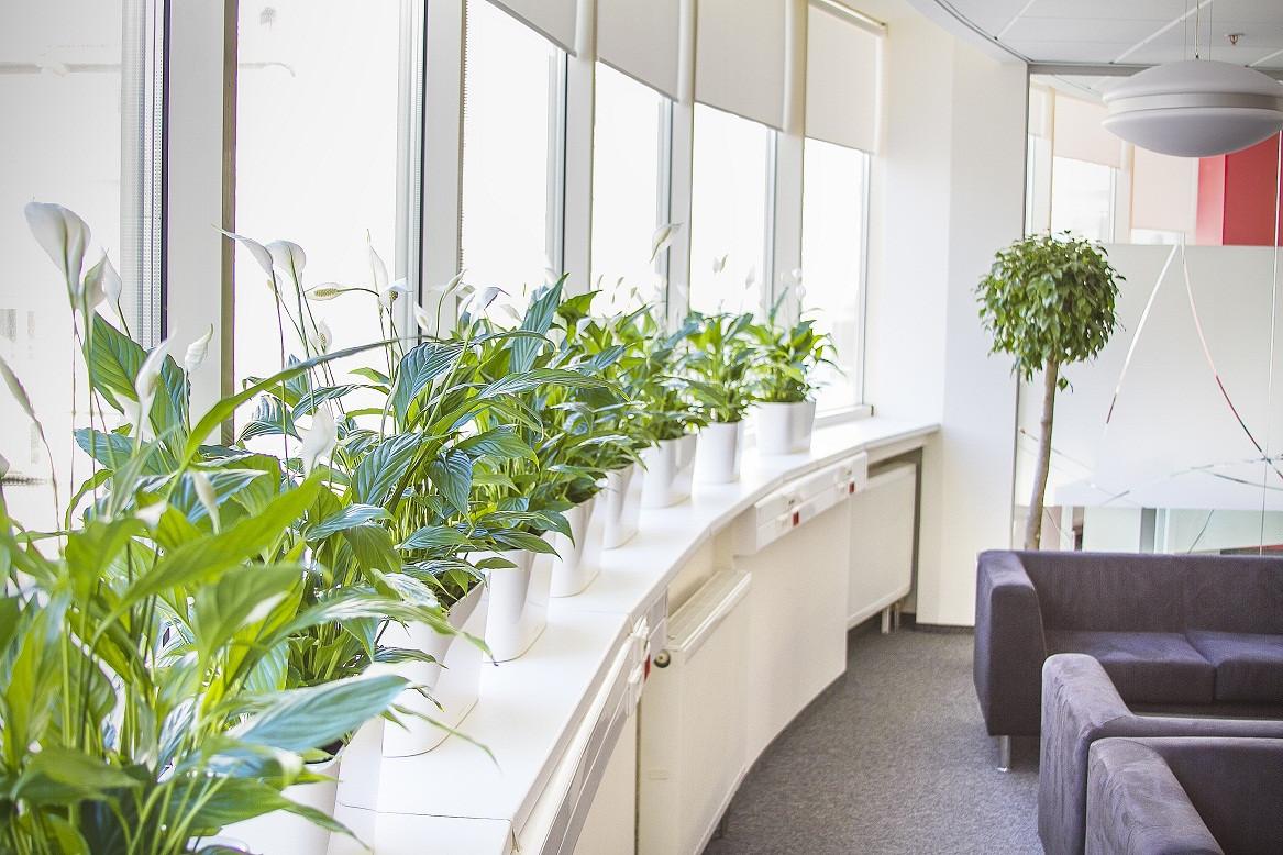 """Озеленение офиса, кабинета """"под ключ""""."""