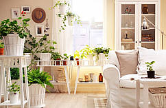"""Озеленение квартиры, дома """"под ключ""""."""