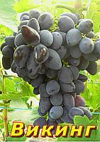 Саженцы винограда очень раннего срока созревания сорта Викинг
