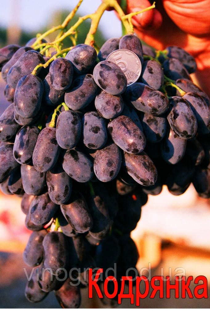 Саженцы винограда раннего срока созревания  сорта Кодрянка