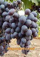 Саженцы винограда среднего срока созревания сорта Маршальский