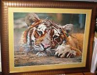Ожидание Тигр Вышитая картина в раме