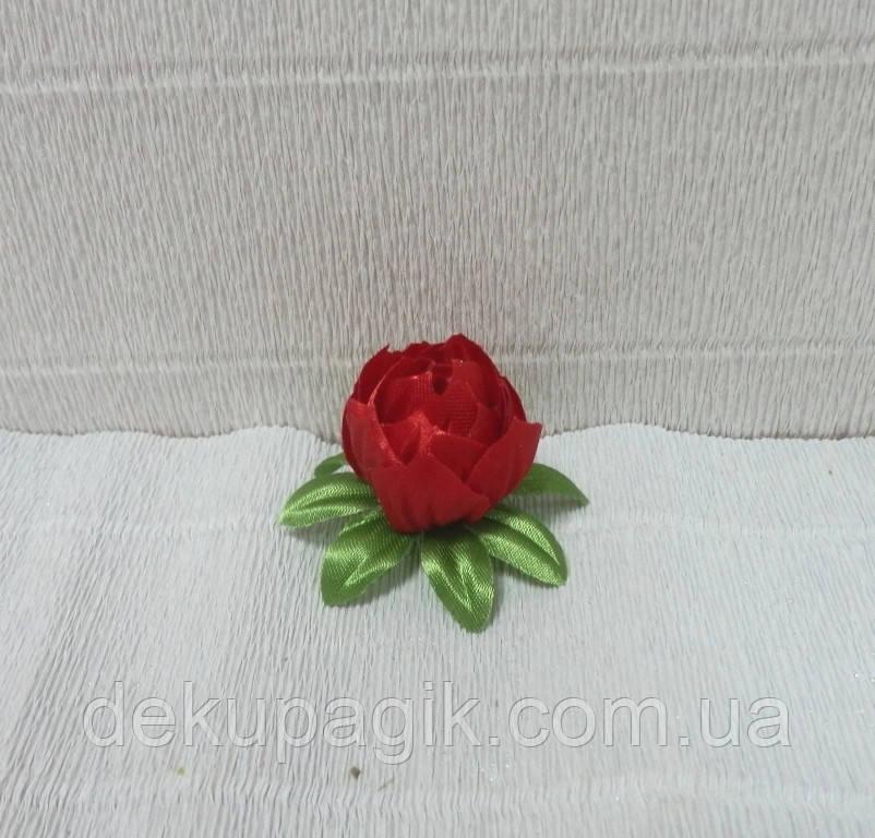 gde-kupit-tsveti-magnoliyu-v-kieve