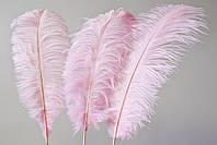 Перо страуса Розовое .Размер 30см