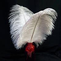 Перо страуса Белое . Размер 30см