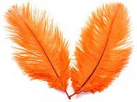 Перо страуса Оранжевое .Размер 15-20cм
