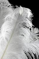 """ПЕРО страуса """"ЛЮКС"""".Цвет белый.Размер 60-65cм"""