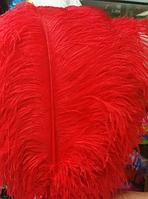 """ПЕРО страуса """"ЛЮКС"""".Цвет Красный.Размер 60-65cм"""