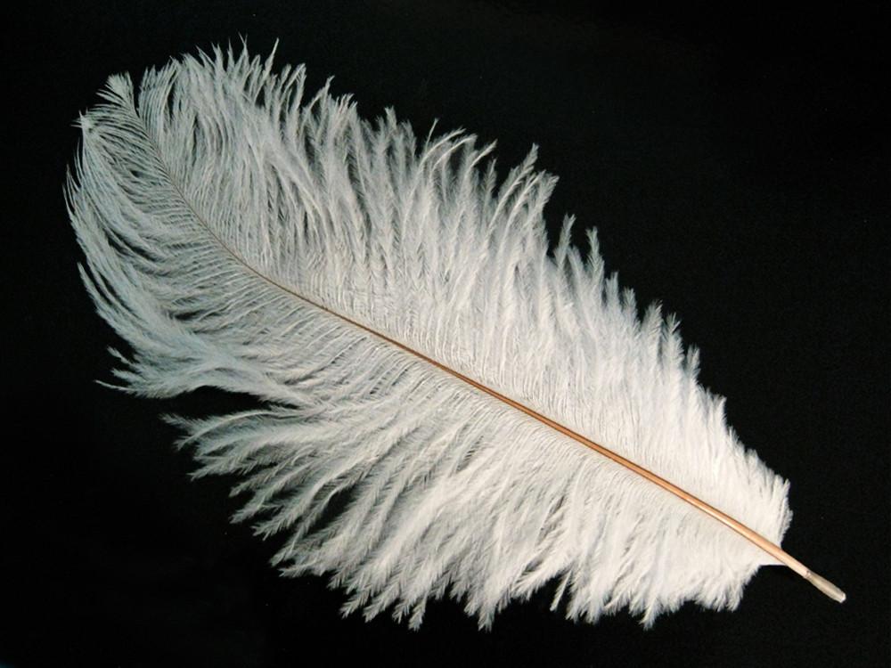 Перо страуса Белое . Размер 15-20cм