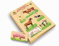 Рамки вкладыши с подслойным рисунком. Домашние животные. Вундеркинд (РВ-054)