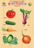 Рамки вкладиші Овочі України. ТМ Вундеркінд (РВ-053), фото 2
