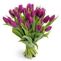Букет однотонных тюльпанов( 25 шт)
