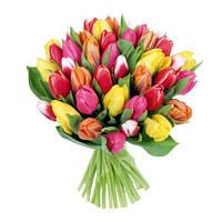 Букет из разноцветных тюльпанов (51 шт)