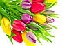 Поздравляем Вас милые девушки и женщины с 8 марта...