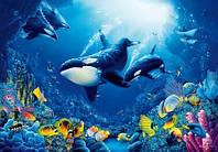 Фотообои Водный мир 366*254