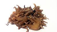 Ятрышник пятнистый корень 100 грамм