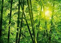 Фотообои  Бамбуковый лес 366*254