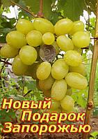 Саженцы винограда средне-раннего срока созревания сорта Новый Подарок ( ПЗВ 4-7 )