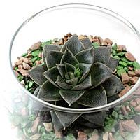 Флорариум с суккулентами/кактусами
