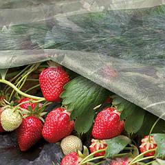 Агроволокно AgroVinn (Польща)