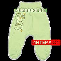 Ползунки (штанишки) на широкой резинке р. 56 демисезонные ткань ИНТЕРЛОК 100% хлопок ТМ Алекс 3165 Зеленый1