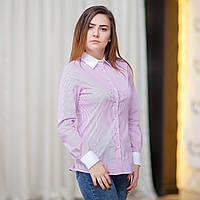 Женская рубашка в белую и розовую полоску, белые воротник и манжеты . Разм. XS, S, M, L, XL, XXL.Davanti.