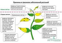 Причины дефицита элементов питания у растений