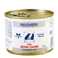 Royal Canin Recovery/Роял Канин консерва для котов и собак  в восстановительный период после болезни