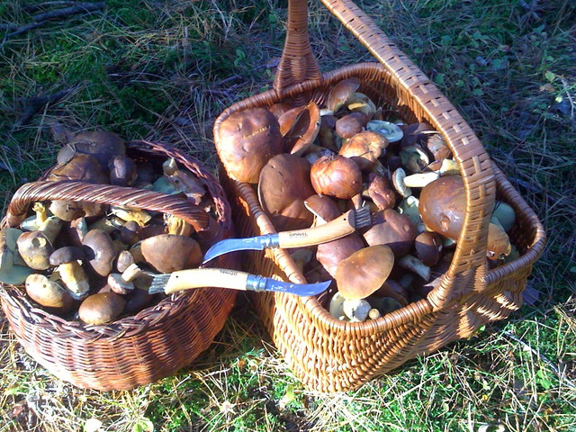 Опинель грибной Opinel Champignon 8 VRI 000516