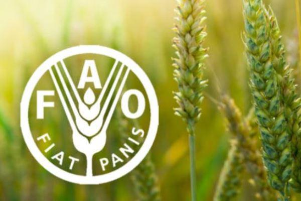 Эксперты ФАО считают, что роль мирового сельскохозяйственного рынка возрастет