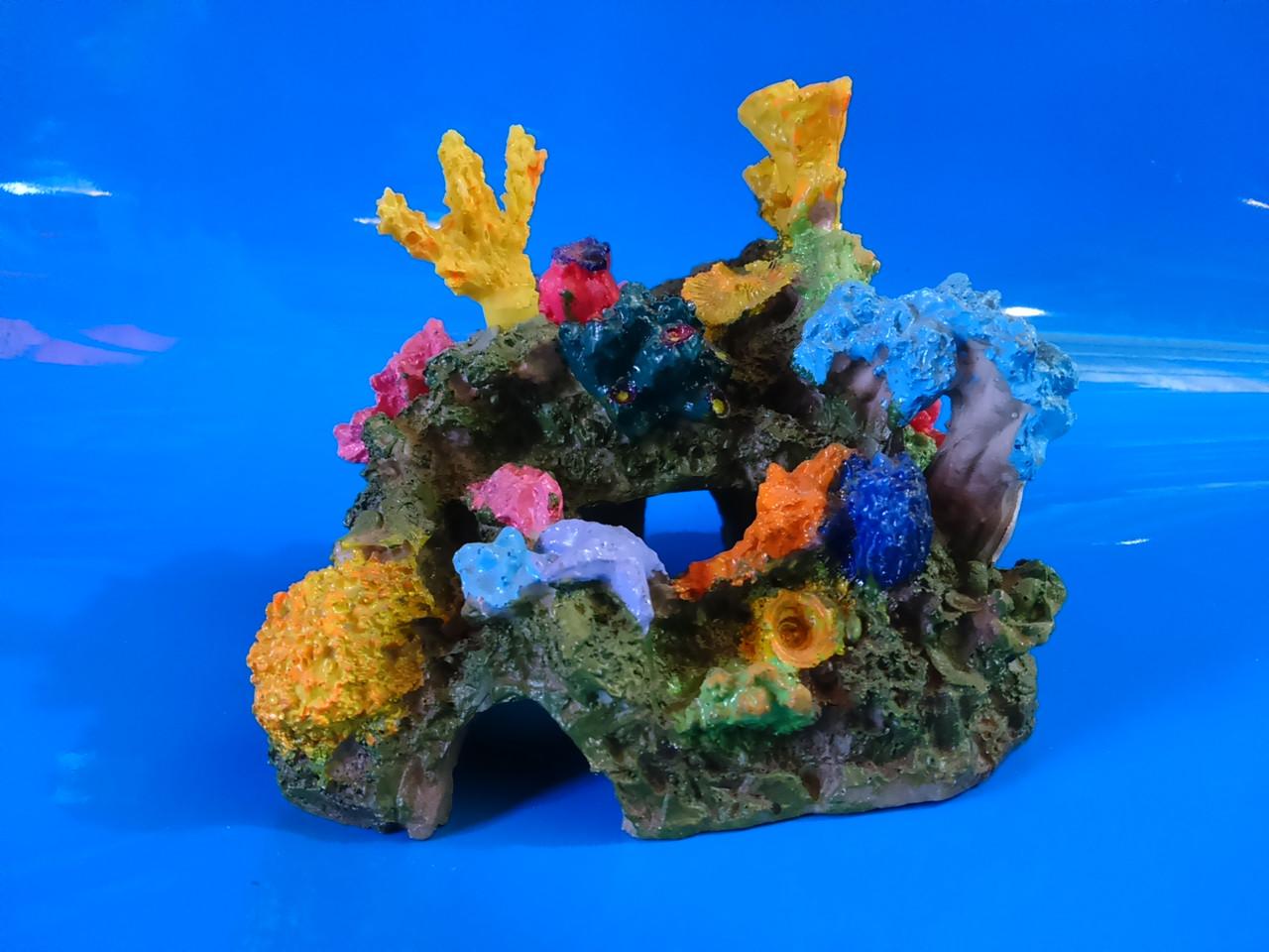 Полый риф с кораллами
