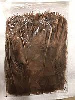 Перо петуха стриженое. Длина 15-17см.Цвет коричневый