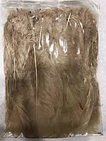 Перо петуха стриженое. Длина 15-17см.Цвет светло коричневый