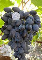 Саженцы винограда позднего срока созревания.
