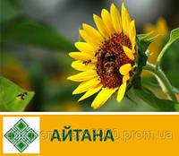Семена подсолнечника Айтана (103 дн)