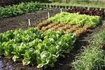 Уплотнённые посевы