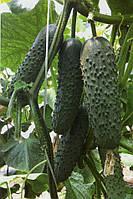 Огірок Седрік F1 10 насінин, фото 1