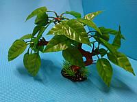 """Растение серии """"Sunny"""" KA-163B"""