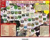 """Стенд в кабинет биологии """"Красная книга Украины"""""""