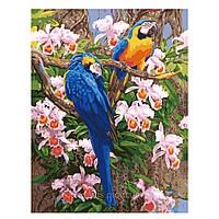 "KH 1055 ""Яркие попугаи 2"" Картина по номерам на холсте 40х50см"