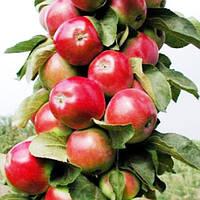 """Яблоня колоновидная """"Джин"""""""