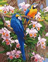 """Картина раскраска по цифрам """"Попугаи в цветах"""", 40х50см. (G355, MG1055, КН1055)"""